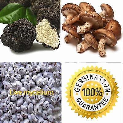 100% LIVE Lot 30g x 2 Truffle Shiitake Mycelium Seeds Fungus Spawn Kit Book PDF