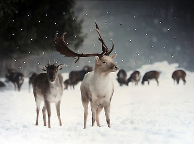 Christmas Decoration Light Up LED Canvas Wall Picture - Landscape Reindeer
