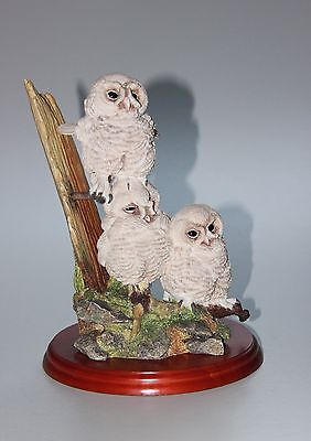 Border Fine Arts, Triple Tawny Owlets, A5207.