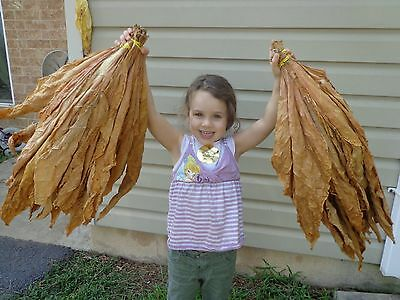 Tobacco Seed- SHTF - Survival Pack - Burley Virginia Turkish - 1,500+ Seeds
