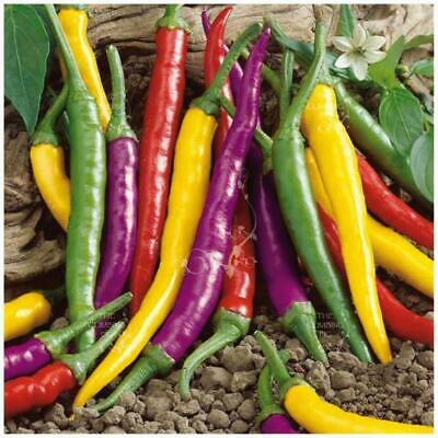 "Chilli ""Fruta Lila™"" seeds 