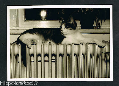 vintage FOTO – PHOTO, Katze Heizkörper Radiator cat chat radiatuer /98