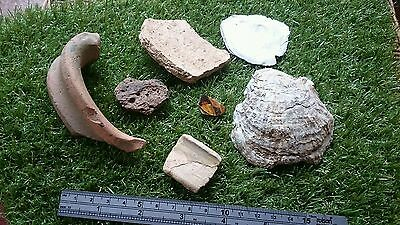 Ancient Yorkshire Site finds mixed pottery from 9 century ad nice Oyster shells