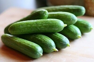 1g (approx. 40) cucumber seeds LIBELLE H middle early, excellent for pickling