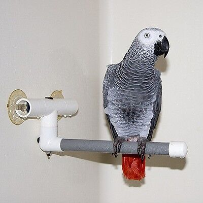 Parrot Shower Window Perch African Grey Amazon