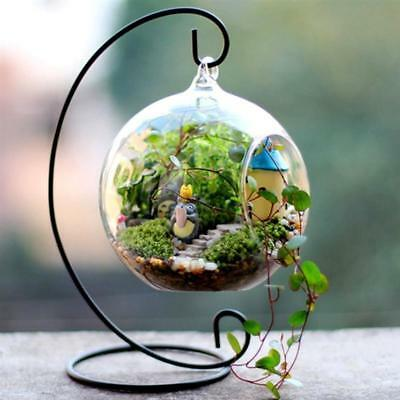 4 Pack Med. Globe Glass Terrariums Centerpiece Wedding DIY Fairy Garden Decor