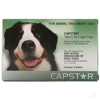 6 Pack Capstar Flea Tablets Large Dogs Flea Treatment | Large Dog Flea Pills