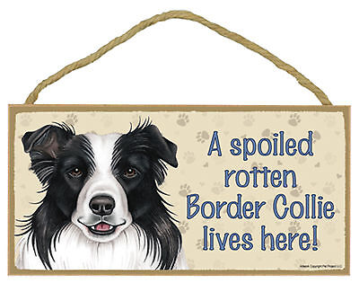 A spoiled rotten Border Collie lives here! Dog Wood Sign Plaque - USA Made - NEW