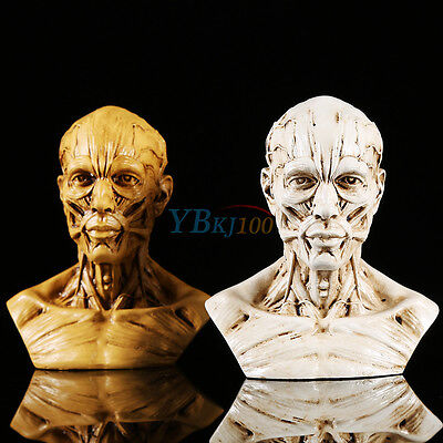 "4"" Resin Human Anatomical Anatomy Skull Head Muscle Bone Medical Model Education"