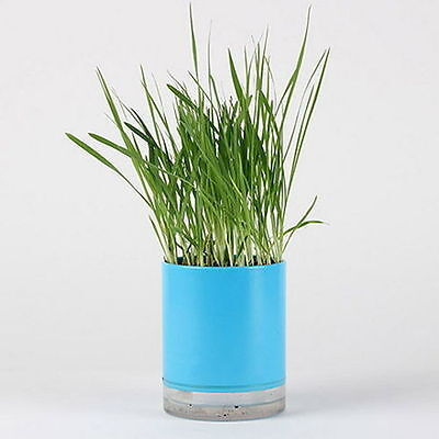 Oat Seed Cat Grass Growing Complete Kit Healthy Pot ige