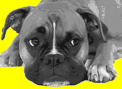 Cool Boxer Dog Paint By Number Art Kit