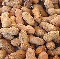 Roasted Peanuts In Shell 20kg - For Parrots & People