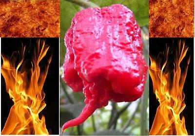 5 Carolina Reaper Seeds HP22B Hottest pepper on Earth! World Record Extreme HOT