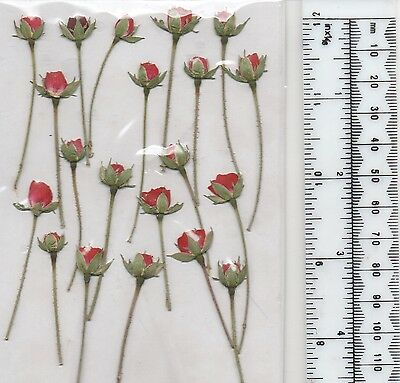 Real Pressed Flowers, 20 Tiny Red Rose Buds Ideal For Card Making & Floral Craft