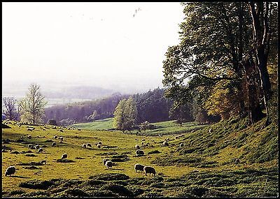Postcard - Cotswold Sheep Pastures Postally Used Gloucestershire