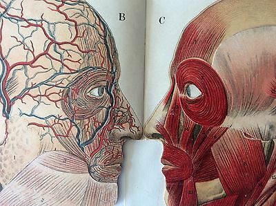 Antique 1900 Medical HEAD Dissection BRAIN Anatomy Macabre Fold Out Bookplate