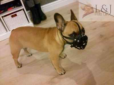 Light leather Dog Muzzle for French Bulldog ""