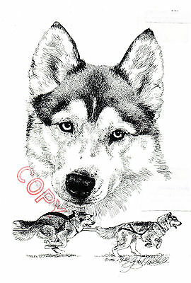 Siberean Husky Limited Edition Print by Lyn St.Clair