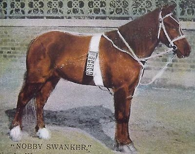 WW1 Extremely rare postcard WW1collection  for wounded horse Nobby Swanker