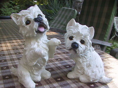 Two wonderful white West highland terriers in cute poses
