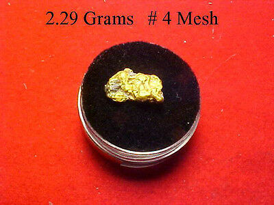 Gold Nugget 2.29 Grams  Out Of The American River