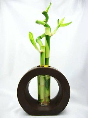 Live Spiral 3 Style Lucky Bamboo Plant Arrangement Ceramic Vase Brown Best Gift