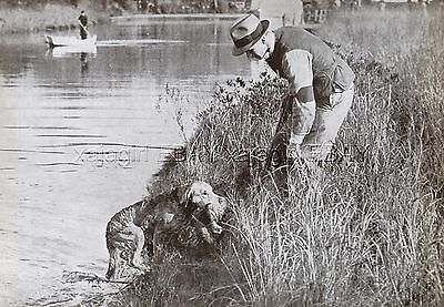 DOG Chesapeake Bay Retriever Retrieving Game to Hunter, Vintage Print 1930s