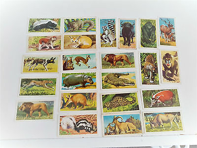 brooke bond  tea  cards 23 african wild life  all excellent cond