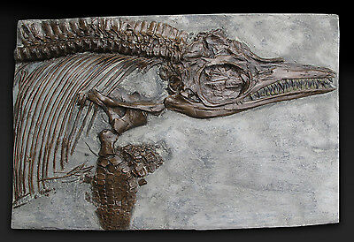 Fossil Ichthyosaur Breviceps Dinosaur Replica Cast fossils fossile fossilien