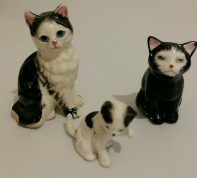 3 black and white cats