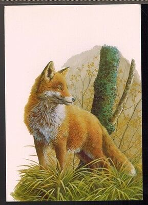 Carte Postale - Le Renard - Art Et Nature - Protection - Faune - Andre Buzin