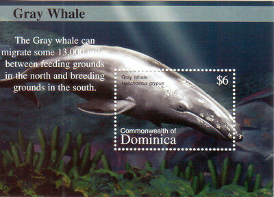 Dominica 2002 Gray Whale Wal