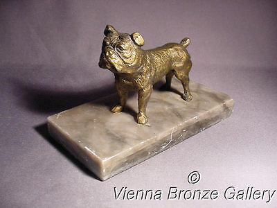 1938 - 1945:  A beautiful lifelike VIENNA BRONZE Bulldog on Marble