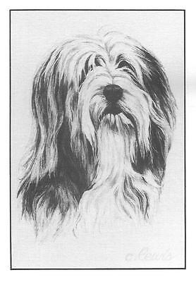Beardie Bearded Collie Note Cards by Chris Lewis Brown - Pk of 10 cards