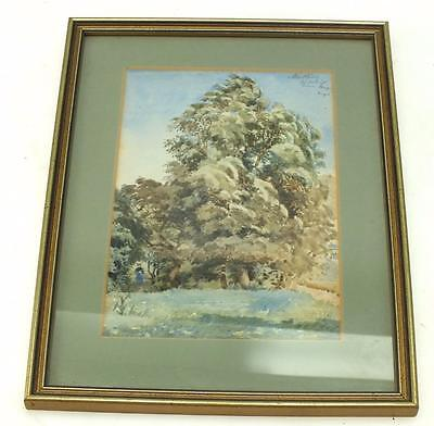 20thC Watercolour Painting Woodland Tree - Landscape Framed Picture Signed