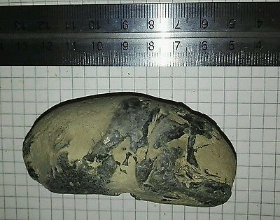 Fossil Fish Section, Sheppey, Eocene, London Clay