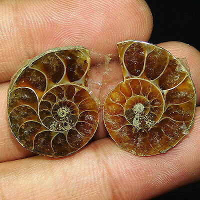34.95Cts 100% NATURAL CHARMING AMMONITE PAIR  25X20 LOOSE CAB GEMSTONE UN395