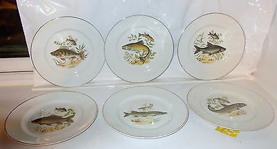 Vintage W H Grindley Fish Pictorial Plates - Set Of 6