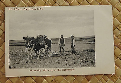 Holland America Line Postcard; Harrowing with Oxen in Netherlands; Unused PC