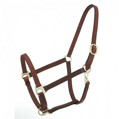 Royal King brown narrow leather track halter horse size horse tack equine 44-716