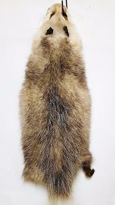 Opossum Hides Stretched/Dried Case Cut-No defects 4 Toys Crafts & Manuf.