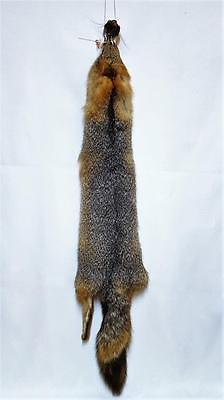 Premium Tanned Winter Grey Fox Hides-Case Cut -Collector Fur-From Prof. Taxid'st