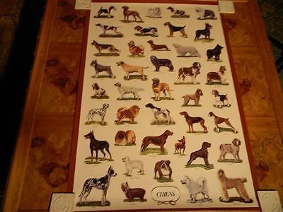 """Phenomenal, Giant Dog Lithograph, """"Chiens""""; Original Vintage Packaging; Rare!"""