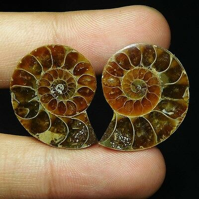 49.7Cts 100% NATURAL GORGEOUS AMMONITE PAIR FANCY 27X22 CAB GEMSTONE UI211