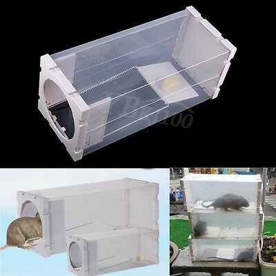 White Humane Rat Trap Cage Animal Pest Rodent Mice Mouse Bait Catch Capture Box