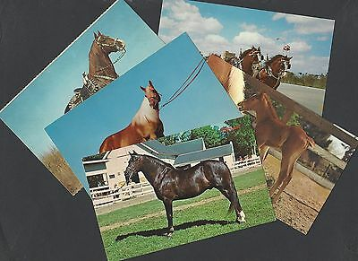 5 Postcards of Different Types of  Horses