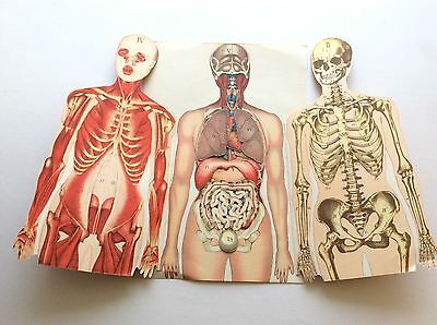 Antique 1924 Medical HUMAN BODY Dissection Anatomy Macabre Fold Out Bookplate
