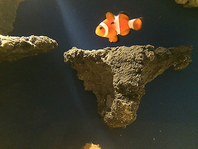 Magnetic Marine Aquarium Rock Shelf Display for small Corals and Frags