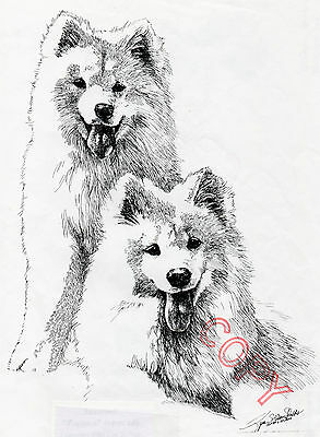 Samoyed Open Print by Lyn St.Clair