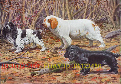 DOG Clumber SPANIEL, Antique 85+ Year Old Print